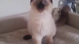 My cat just walk up and looking for me - Video