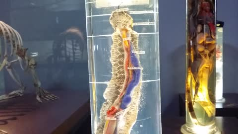 Turtle and Snake Anatomy Display