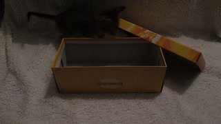 LILA CAT - Out of the box II