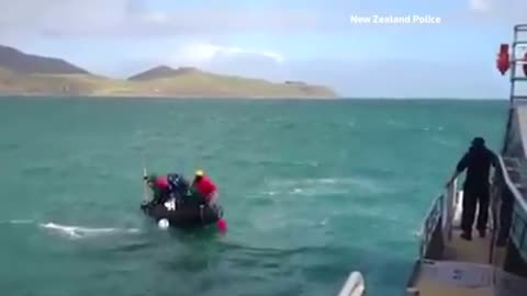New Zealand rescue team saves humpback whale tangled amongst cray pots
