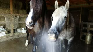 Horses make the funniest faces playing with water hose