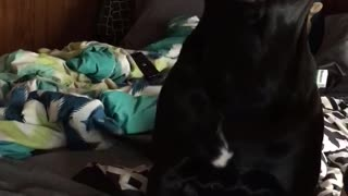 Guilty Dog Tells on Herself