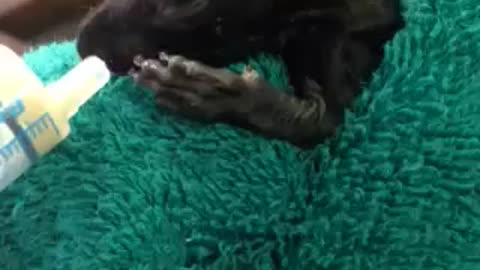 Baby Squirrel rescued