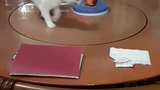 cat, time to exercise - Video