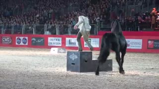 Frédéric Pignon dances with three Friesian stallions - Video