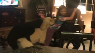 Dog wants to learn acrobatics too!  - Video