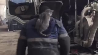 Cat Helps Out in A Car Repair Shop