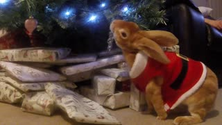 Cute Mischievous Bunny Caught Red Handed!  - Video