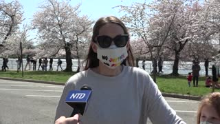 DC Cherry Blossoms Reach Peak Early
