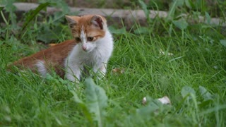 A Cat playing in the garden