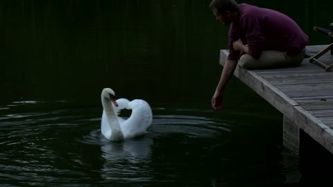 man sitting in the lake dock playing with swan