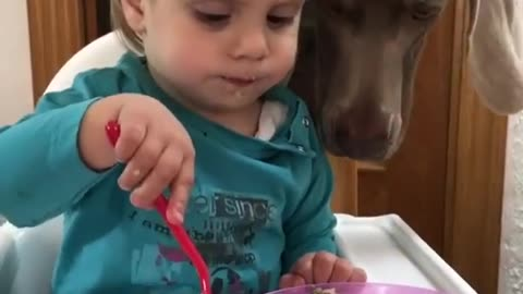 Dog Steals Kid's Food Every Time He's About To Use His Fork