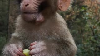 Cute Baby Monkey Eats Cucumber Sweetly