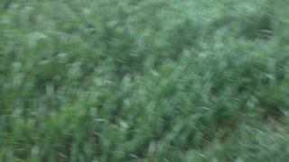 Nothing feels as good as running in grass - Video