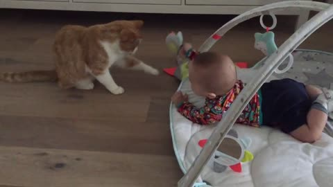 Cat and baby spark amazing friendship