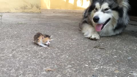 When Dad Brought This TINY Kitty Home, He Never Expected His Dog To React Like This …OMG