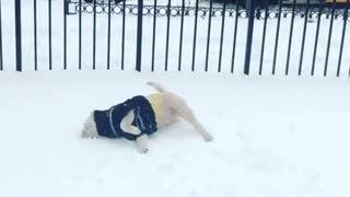 Excited puppy loves to roll around in the snow