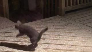 Kitten catches snowflakes during first snowfall experience - Video