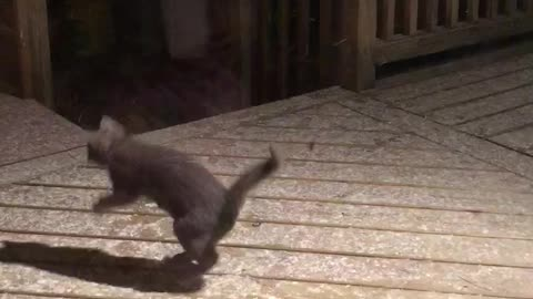 Kitten catches snowflakes during first snowfall experience