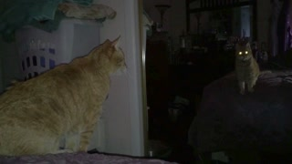 Creepy Cat Meows And Hisses At Self In Mirror - Video