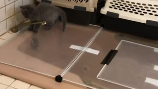 Kittens Everywhere Doing what they want - Video