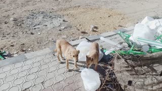 Hungry beautiful dogs eat food and there is something strange