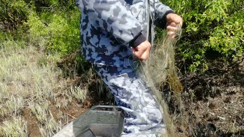 Animal Protection Workers Rescue Starling Caught in Net