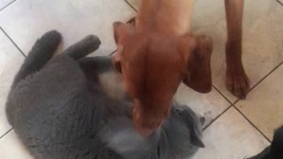 Fearless cat refuses to back down to playful pup