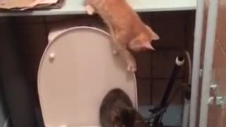 All Fun and Games Until One Cat Falls In - Video