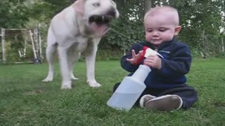 Baby Waters Dog With Spray Bottle - Video