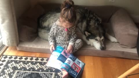 Adorable little girl catalogue shops for Alaskan Malamute