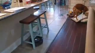 Cute puppy saves bed from evil vacuum