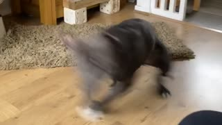 Excited Doggy Has the Spins