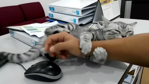 Needy Cat Jealous Of Computer Mouse Wants Owner's Hand Just For Herself