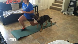 German Shepherd works out with owner - Video