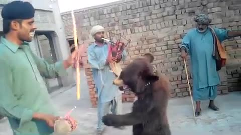 two bears dance and Stunt