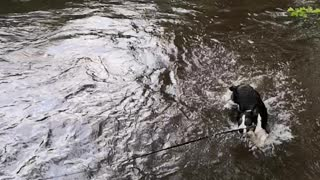 Puppy swims for the first time!  - Video