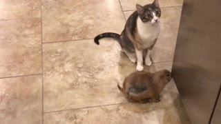 Kitty Cleans Prairie Dog Pal