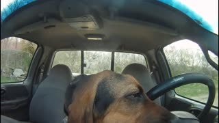 Bloodhound Eats Ford F-150 - Video