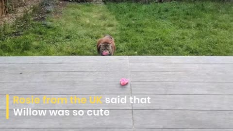 funny videos of cats 2019