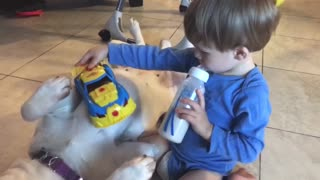Dog serves as belly trail for driving cars! - Video