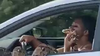 Woman drives down freeway with giant python hanging out of window