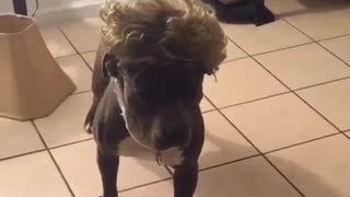 Dog Mannequin Challenge - Video