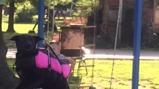 Dog Enjoys A Homemade Zipline - Video