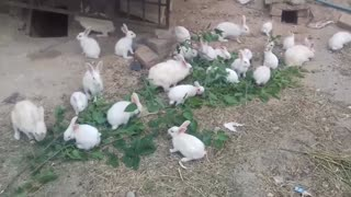 Beautiful White rabbits house