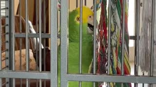 Parrot Puts on an Amazing Performance
