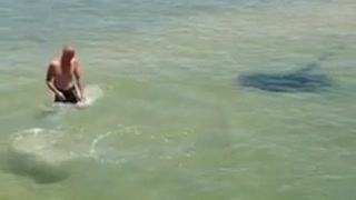 Man Taunts Stingray But The Stingray Hits Back  - Video