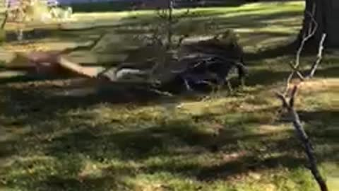 Man falls pulling tree branch