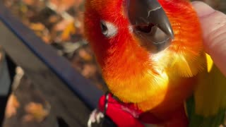 Parrot really enjoying chin scratches
