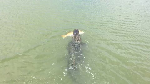Alligator Snatches Little Boy's Prize Fish Straight Off His Line